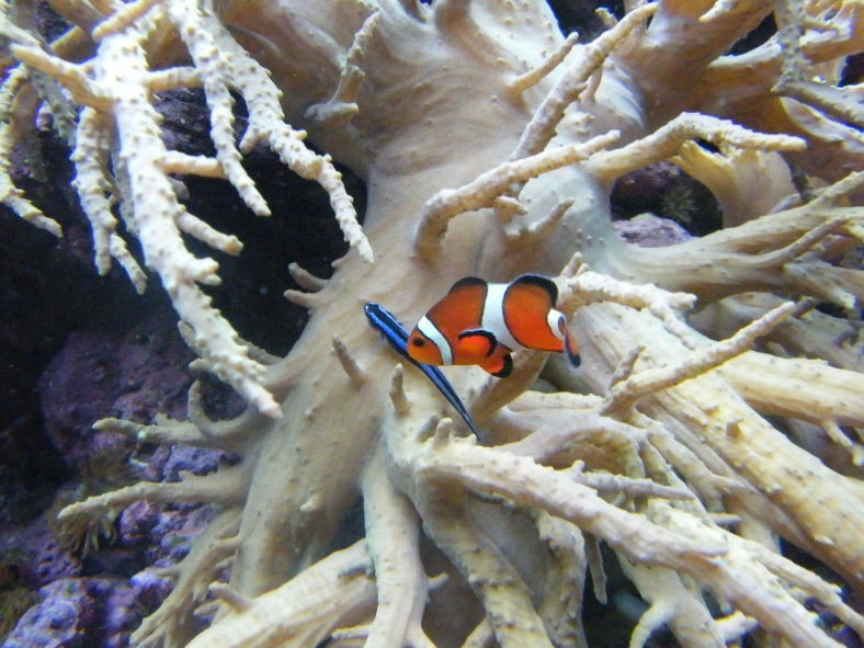 aquarium disney 08 085