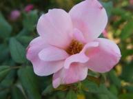 best flowers 188